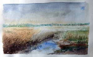 Norfolk, reed beds.